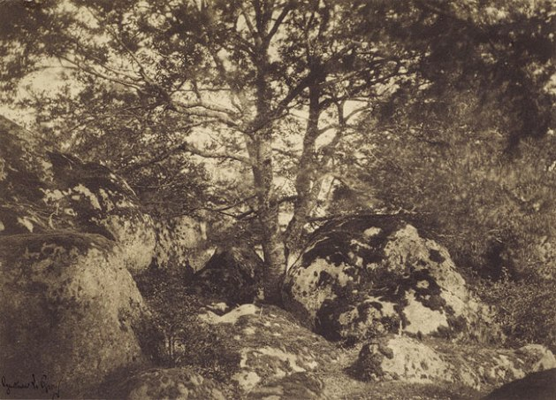 gustave le gray forest