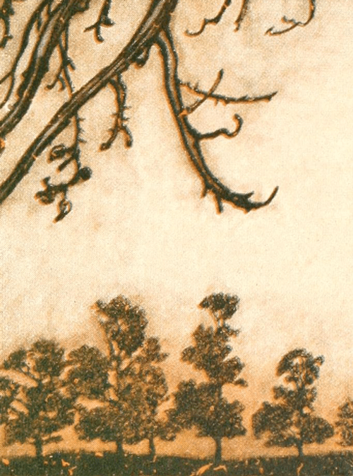 Botanical detail in artwork
