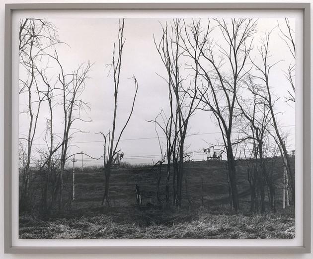 Trees from Spasibo by Davide Monteleone