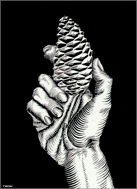 Escher's plants: Hand with fir cone