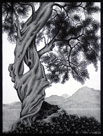 Olive tree by escher