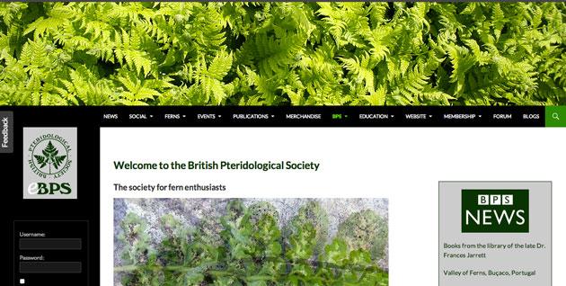 Fern plant society