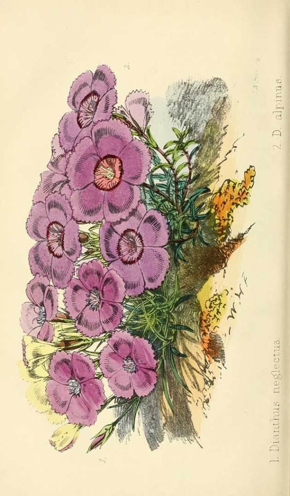 free vintage botanical art