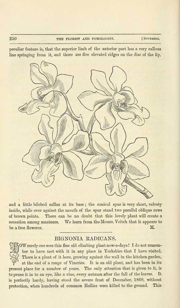 free vintage botanical drawings