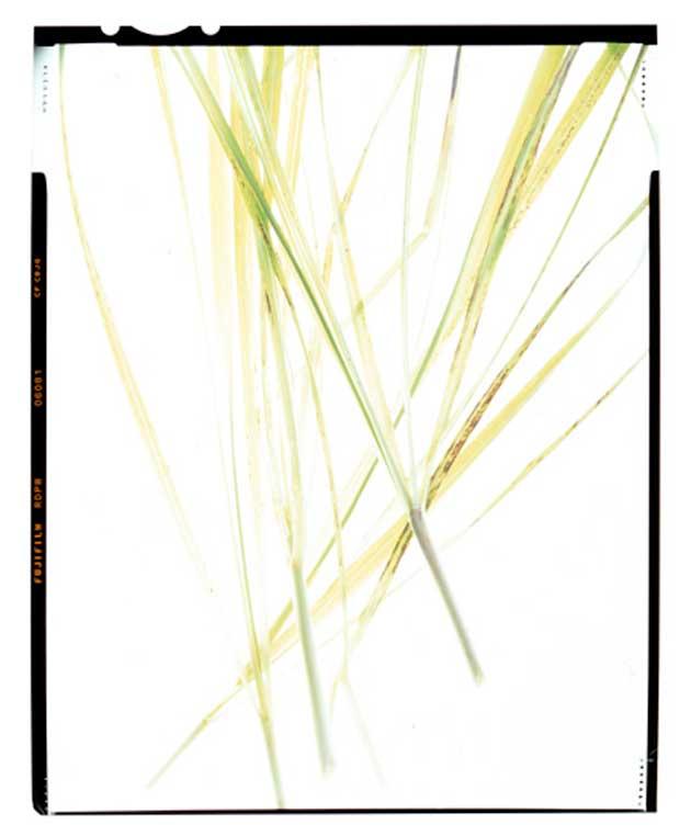 large format Botanical photography
