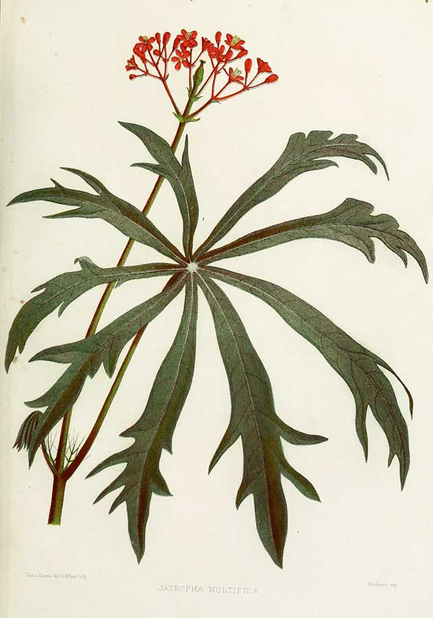 public domain Indian plants