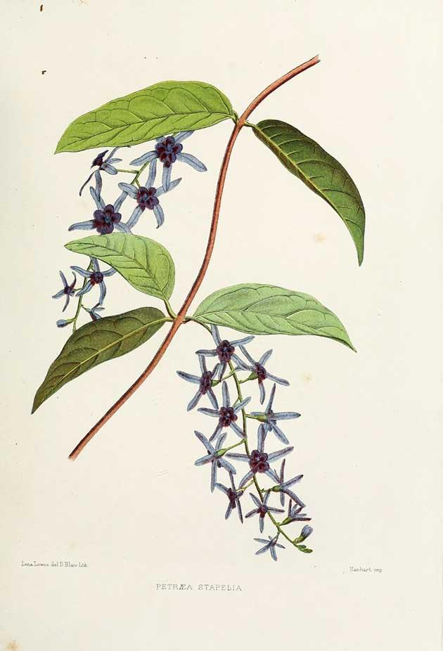 Indian flora