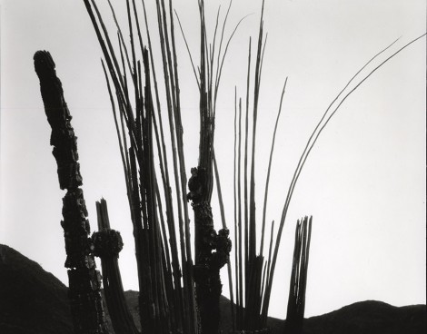 Brett Weston's plants