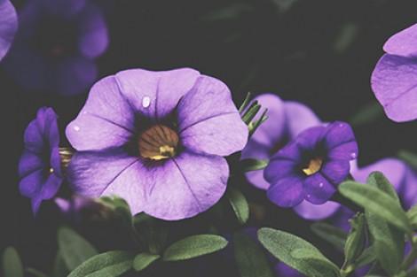 Free Public Domain plant images