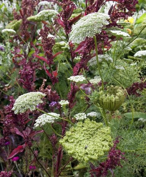 Top 5 plant happenings in June