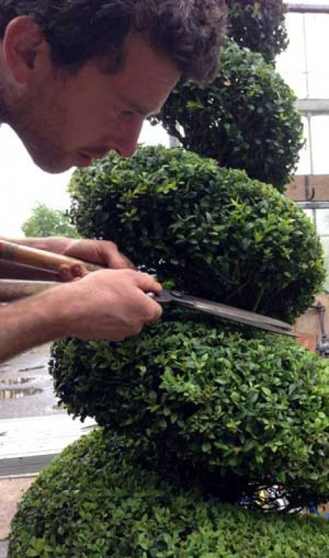 Interview: Topiary Tom shapes the future of plants