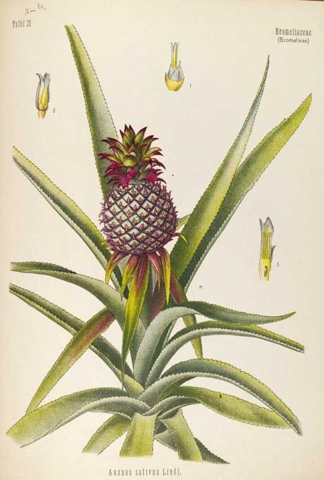 Franz Eugen Köhler's Medicinal Plants – the final volume's artwork!