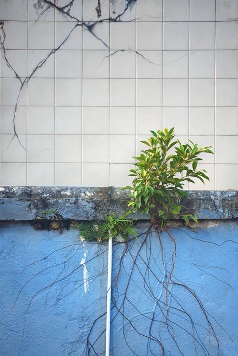 Heroic urban plants
