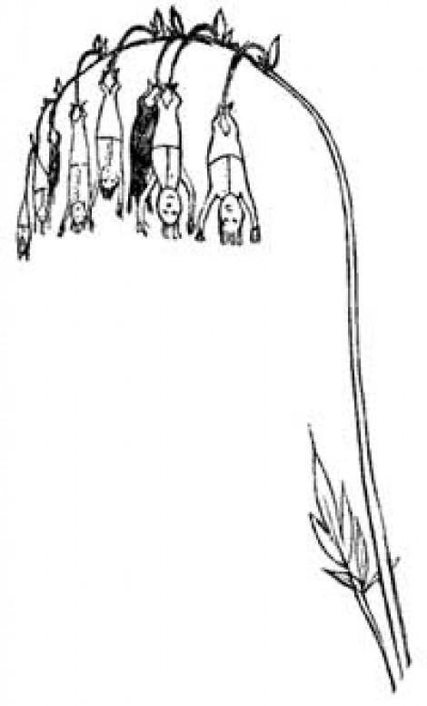 Edward Lear's clever Nonsense Botany
