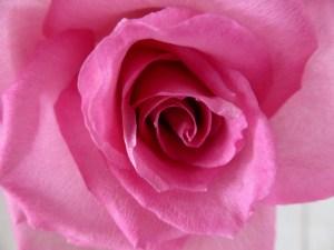 parfum-rose