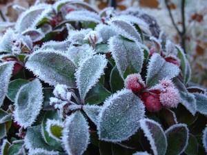 huile-essentielle-wintergreen