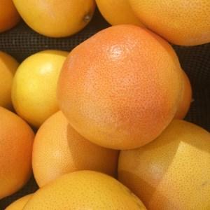 he citrus paradisi