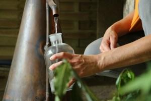 hydrolat-distillerie-intimu