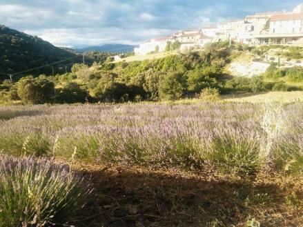 paysage-floraluna