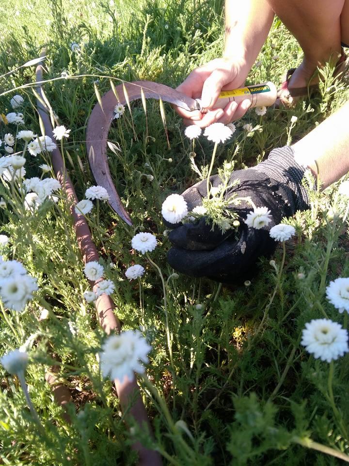 Floraluna, de l'Afrique à Los Masos: des huiles essentielles voyageuses