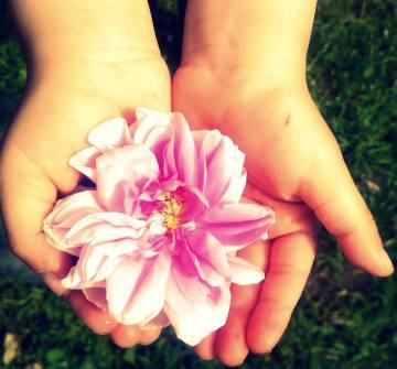 rose-floraluna