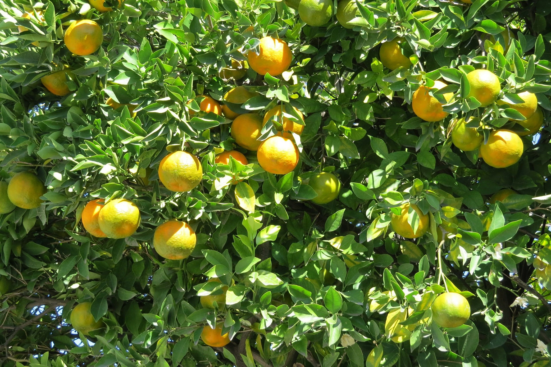 Huile essentielle Petit Grain mandarine: le sommeil du juste