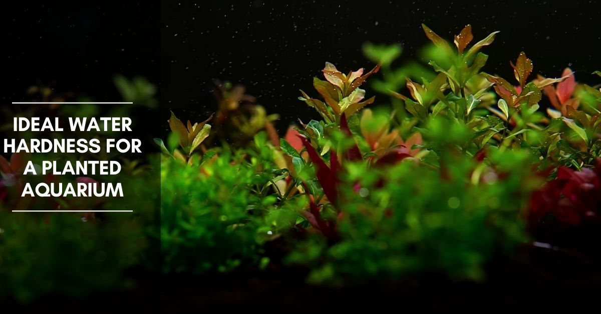 Ideal Water Hardness for a Planted Aquarium (KH & GH) - Planted Nano Tanks