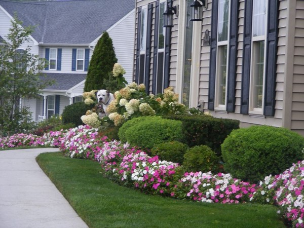 landscaping ideas front