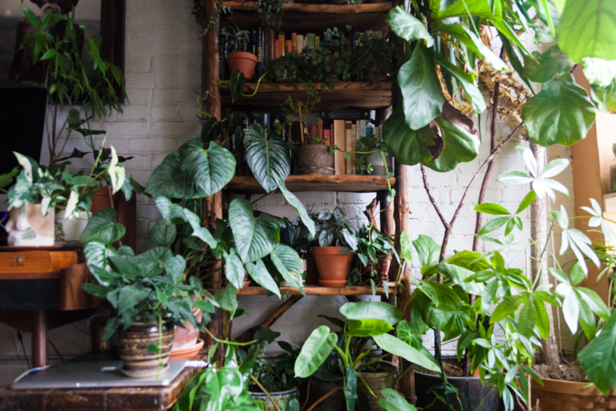 House Plants Which of these 30 Best House Plants should