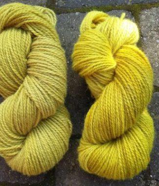 gyldenris uld