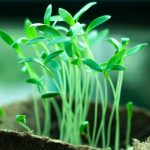 planteSpirer lys