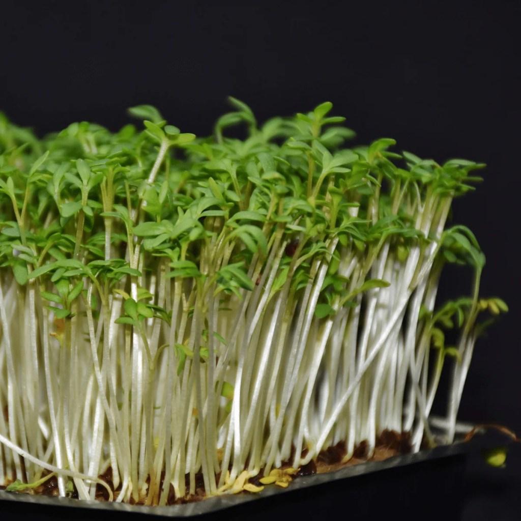 Plantespire nærbillede