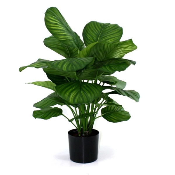 Calathea Fasciata 80 cm kunstplant