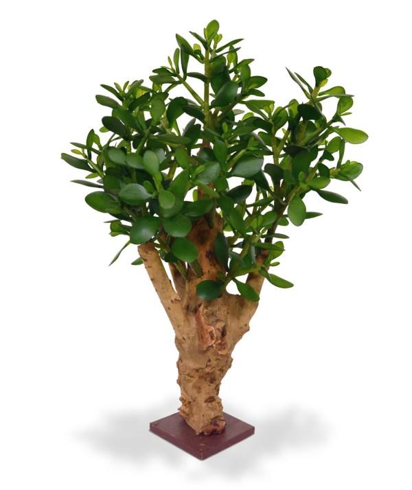 Crassula kunstplant 60 cm op voet