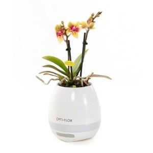 Orchidee mini (inclusief bluetooth muziekbox verwerkt in pot)