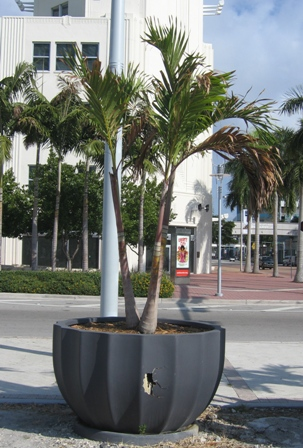 Fiberglass planters are thin, lightweight and strong, but are brittle and prone to damage