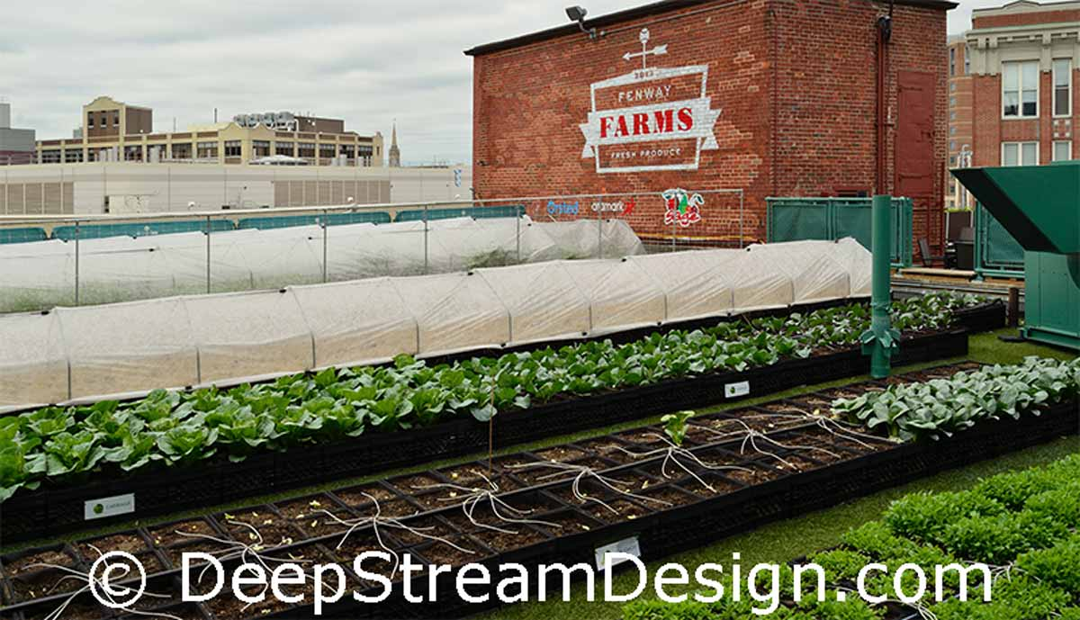 DeepStream Commercial Wood Planter in Recycled Plastic Lumber Farm to table roof top garden containers