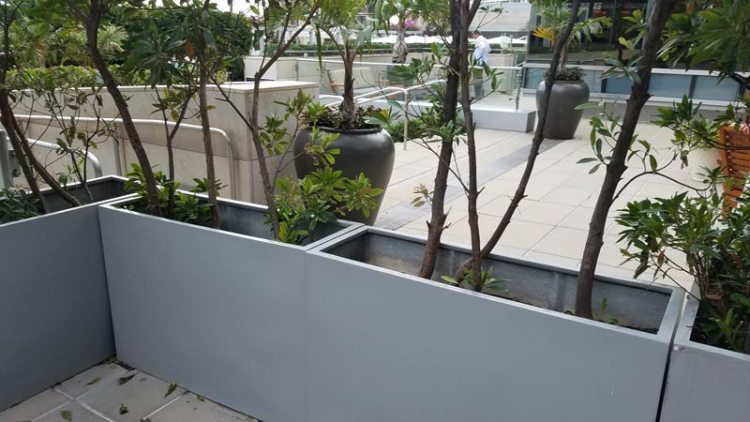 Fiberglass planters are brittle. Without looking closely, you can't see the vertical cracks that are developing.