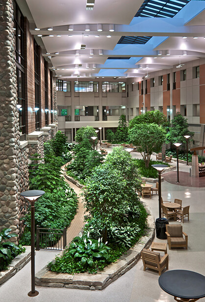 therapeutic and healing gardens