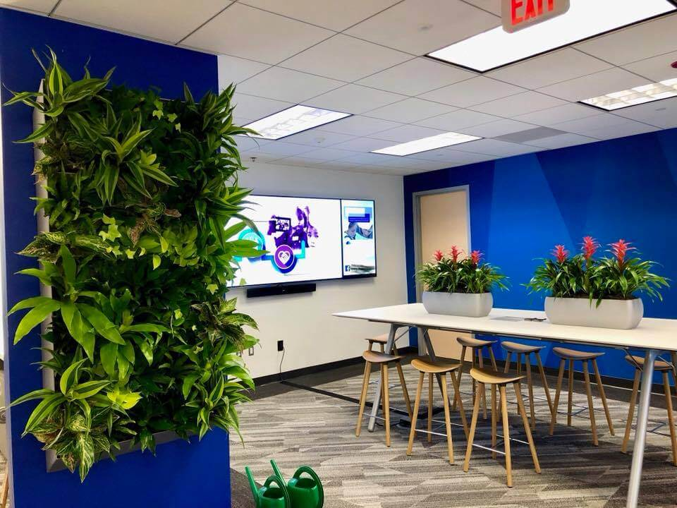 the best plants for offices with