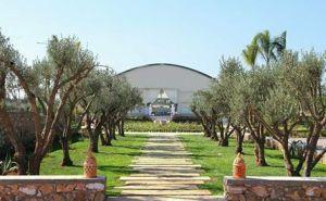 Florabora Maroc - Showroom plantes artificielles