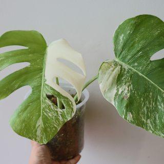 Rare & Uncommon Plants