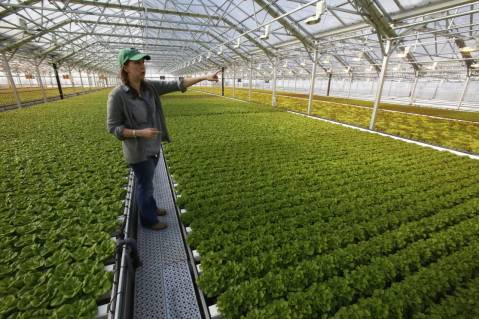 A rooftop greenhouse in Chicago - from the Wall Street Journal