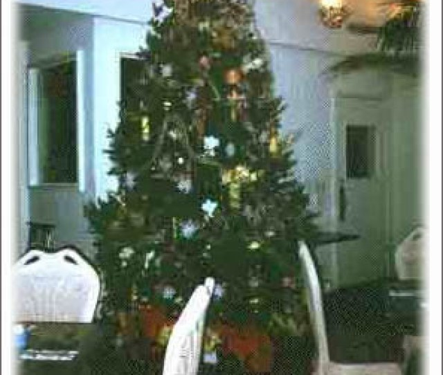 The Trees Prefer Cool Living Christmas Tree Decorated Image