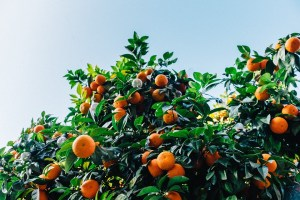 Citrus increase circulation