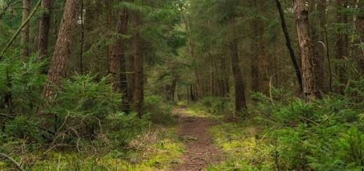 pine bark for parkinson's disease