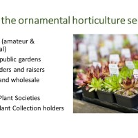 The Nagoya Protocol and the ornamental horticulture sector