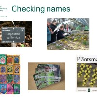 Cultivated plant names - a Horticultural Taxonomist's perspective