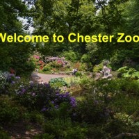 Welcome to Chester zoo
