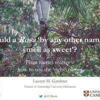 Would a Rosa 'by any other name… smell as sweet'?